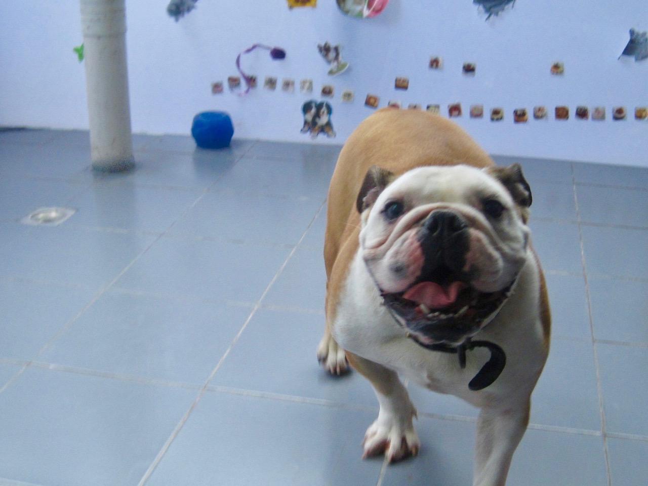 bulldogexerciseroom