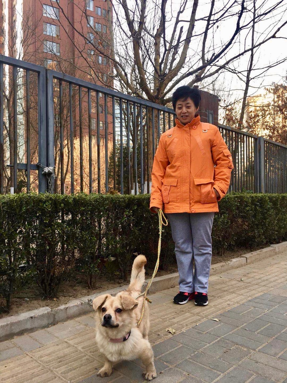 lujiewalkingdog