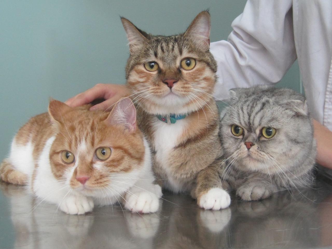 threecats