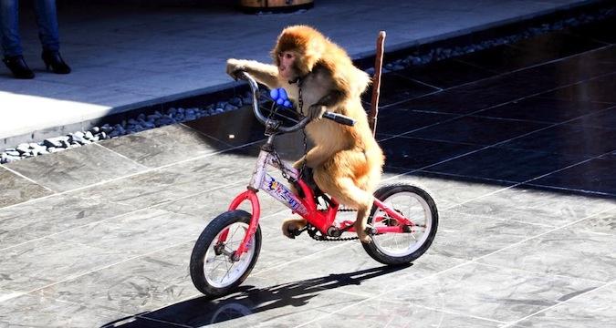 monkeycityweekend