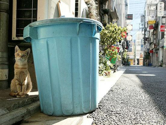 cctv news stray cat photo