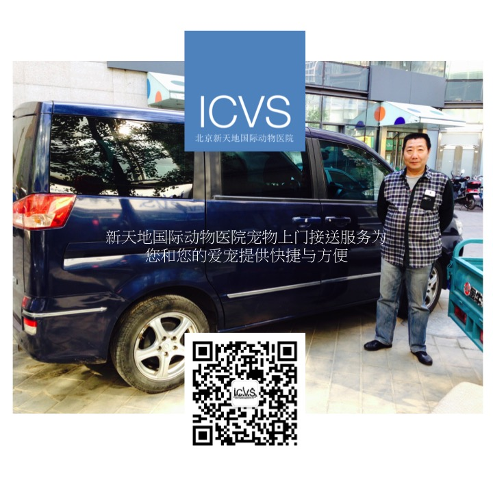 icvspettransport chi