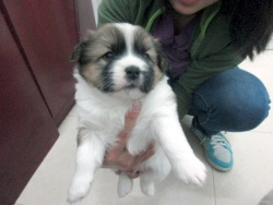 0510-puppy2-ares-250