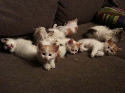 charlottes kittens