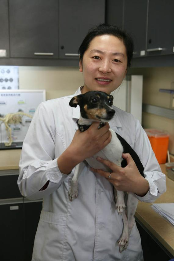dr. sun  josefina